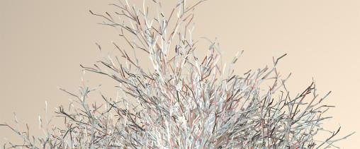 tree_1432797656_3_Camera_a_B0_clop